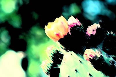 Pioneertown Photograph - Flowers That Cactus Do by Carolina Liechtenstein