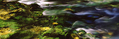 Ozarks Photograph - Flowing Stream, Blue Spring, Ozark by Panoramic Images
