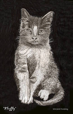 Fluffy El Gato Print by Jack Pumphrey