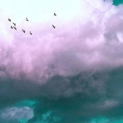 Surrealism Photograph - Fluffy Flight by Courtney Haile
