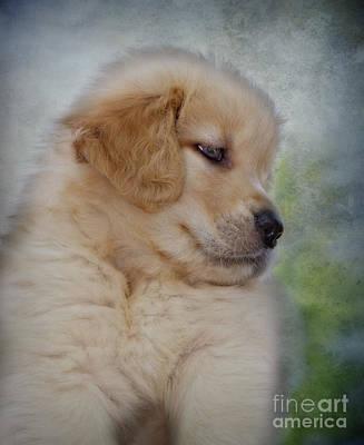 Fluffy Golden Puppy Print by Susan Candelario