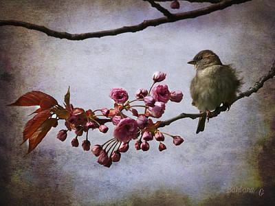 Fluffy Sparrow  Print by Barbara Orenya