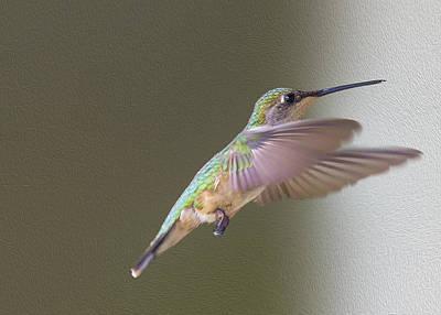 Fluttering Digital Art - Flutter Hummer by Bill Tiepelman