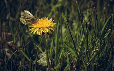Fluttering Photograph - Fluttered By by Chris Fletcher