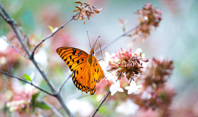 Fluttering Photograph - Fluttering Along by Shelby  Young