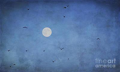 Blackbird Photograph - Fly Away by Darren Fisher
