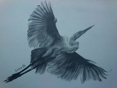 Egret Drawing - Fly Away by Lucy D