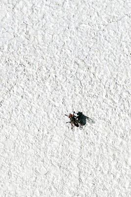 Fly On A Wall Print by Alexander Senin