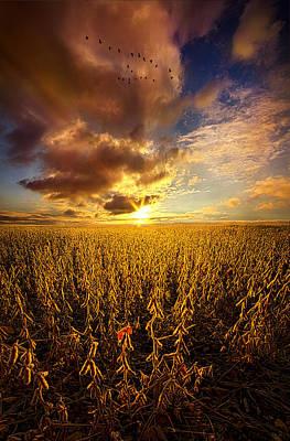 Fly Over Country Print by Phil Koch