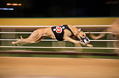 Dog Race Track Photograph - Flying Five by Keith Armstrong