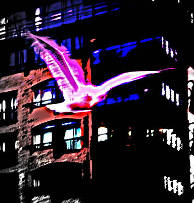 Seagull Flying Alone In The Big City At Night  Print by Hilde Widerberg