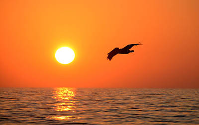 Flying Into The Sun Print by David Lee Thompson