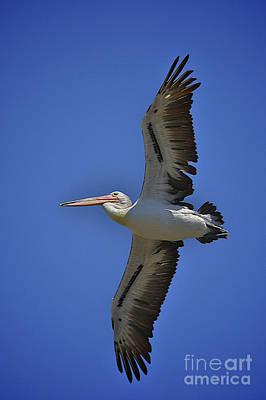 Flying Pelican 3 Original by Heng Tan