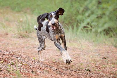 Coonhound Photograph - Flying Puppy by Sierra Luna Photography By Eden Halbert