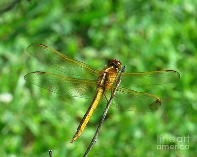 Dragonfly Photograph - Flying With Broken Wing by Scott Cameron