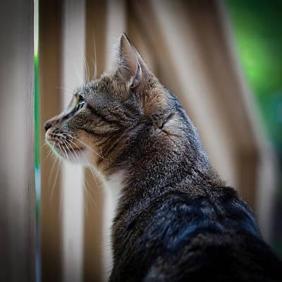 Felines Photograph - Focused Feline by David Patterson