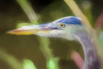 Must Art Photograph - Focused Heron On Maryland Canal by Francis Sullivan