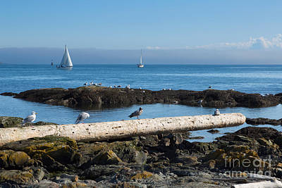 Fog Bank In The Strait Of Juan De Fuca II Print by Louise Heusinkveld