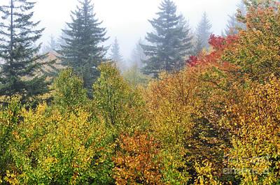 Fog Fall Day Print by Thomas R Fletcher