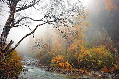 Foggy Autumn Print by Ron Day
