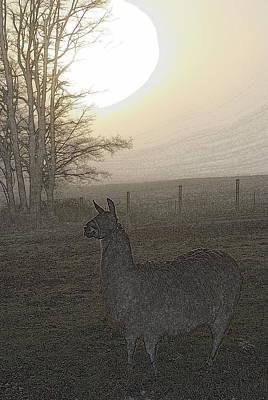 Llama Digital Art - Foggy Llama Sunset by Kathy Sampson