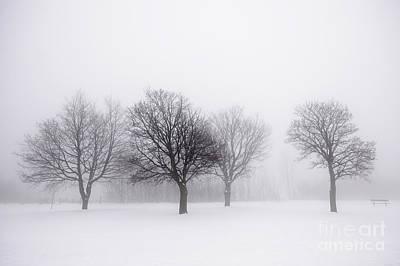 Foggy Park With Winter Trees Print by Elena Elisseeva