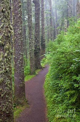 Lichen Photograph - Foggy Trail by Mike  Dawson
