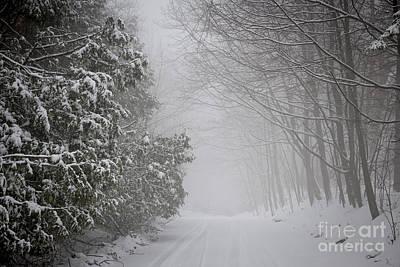 Roads Photograph - Foggy Winter Road by Elena Elisseeva