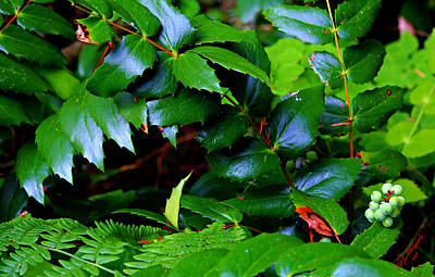 Foliage N Such Print by Jeanette C Landstrom