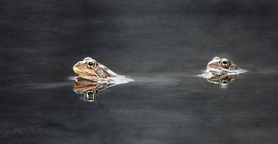 Amphibians Mixed Media - Follow Me by Heike Hultsch