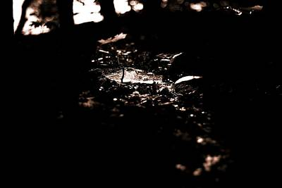 Forest Floor Photograph - Follow The Light by Dan Sproul