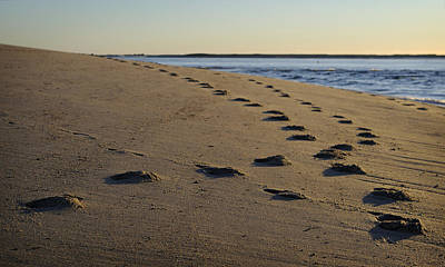 Cape Cod Photograph - Follow Your Path by Luke Moore