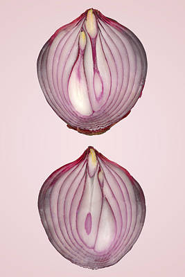 Food - Vegetable - Cross Section Of A Red Onion Print by Mike Savad