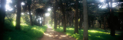 Presidio Park Photograph - Footpath Passing Through A Park, The by Panoramic Images