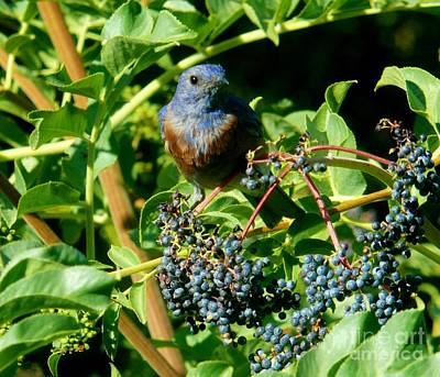 Photograph - For You - Blue  - 2 by Jacquelyn Roberts