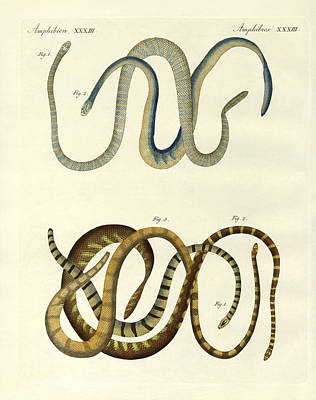 Foreign Kinds Of Blindworms Print by Splendid Art Prints