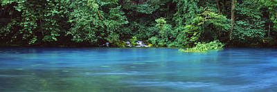 Ozarks Photograph - Forest At The Riverside, Big Spring by Panoramic Images