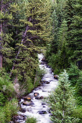 Forest Cascade Print by The Forests Edge Photography - Diane Sandoval