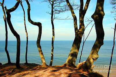 Sunbeams Photograph - Forest Coast by Michal Bednarek
