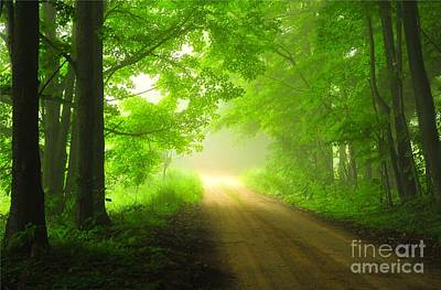 Weather Photograph - Forest Dawn by Terri Gostola