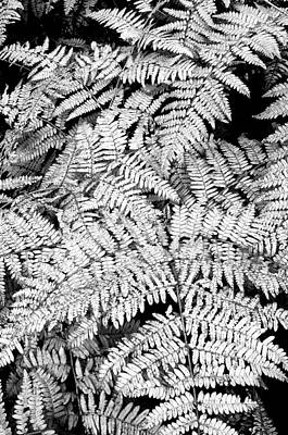 Forest Floor Photograph - Forest Fern by The Forests Edge Photography - Diane Sandoval