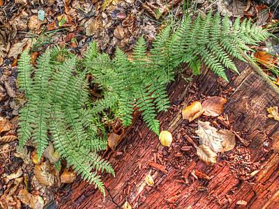 Forest Floor Photograph - Forest Floor Ferns by Gill Billington