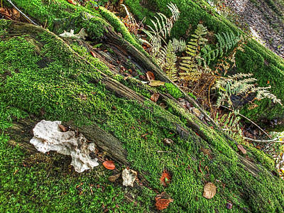Forest Floor Photograph - Forest Floor Fungi And Moss by Gill Billington