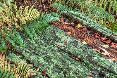 Forest Floor Photograph - Forest Floor Moss And Ferns by Gill Billington