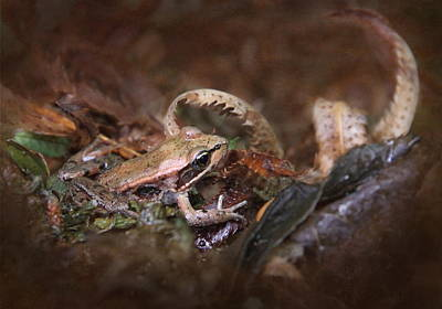 Forest Floor Photograph - Forest Frog by Angie Vogel