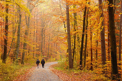 Forest In Fall - Trees With Beautiful Autumn Colors Print by Matthias Hauser