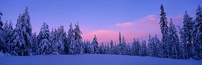 Forest In Winter, Dalarna, Sweden Print by Panoramic Images