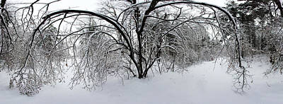 Quebec Photograph - Forest In Winter by Panoramic Images