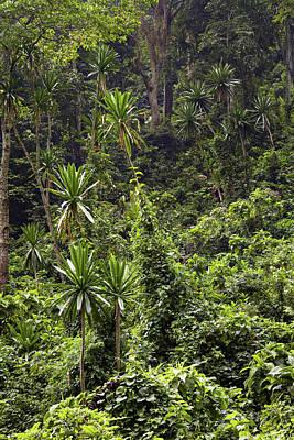Lobelia Photograph - Forest Lobelia (lobelia Gibberoa by Martin Zwick