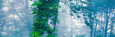Forest Nagano Kijimadaira-mura Japan Print by Panoramic Images
